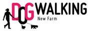 Dog Walking/Running/Sitting Service New Farm