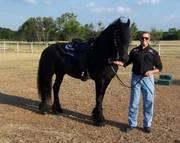 Outsatnding English riding horse availble