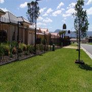 Palmetto, Turf Top Dressing, Turf Brisbane