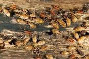 Find Best Termite Treatment In Brisbane