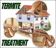 Termite Treatment In Brisbane - Termite Protection