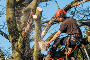 Tree maintenance near me Mount Cotton