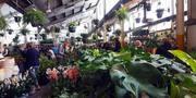 Brisbane - Huge Indoor Plant Warehouse Sale - Foliage Fiesta