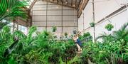 Brisbane - Huge Indoor Plant Warehouse Sale - Mad Hatter's Party