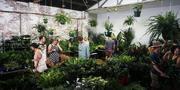 Brisbane - Huge Indoor Plant Warehouse Sale - Zoo Party!