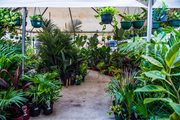 Brisbane - Huge Indoor Plant Warehouse Sale - Springtime Splendour