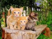 lovely  kittens.for adoption
